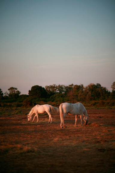 Horses in Camargue  2009 by Lisa Ross